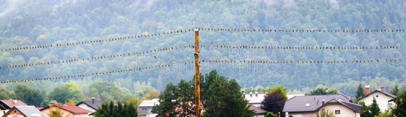 Pájaros que descansan sobre el alambre eléctrico o el cable de teléfono o imagen de archivo