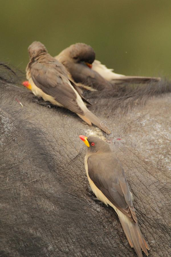 Pájaros que disfrutan de vida fotografía de archivo libre de regalías