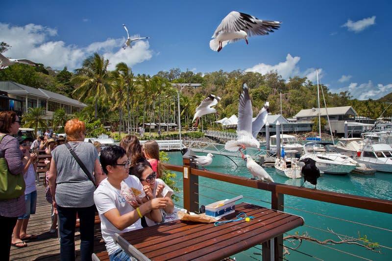 Pájaros que roban el almuerzo de turistas imágenes de archivo libres de regalías