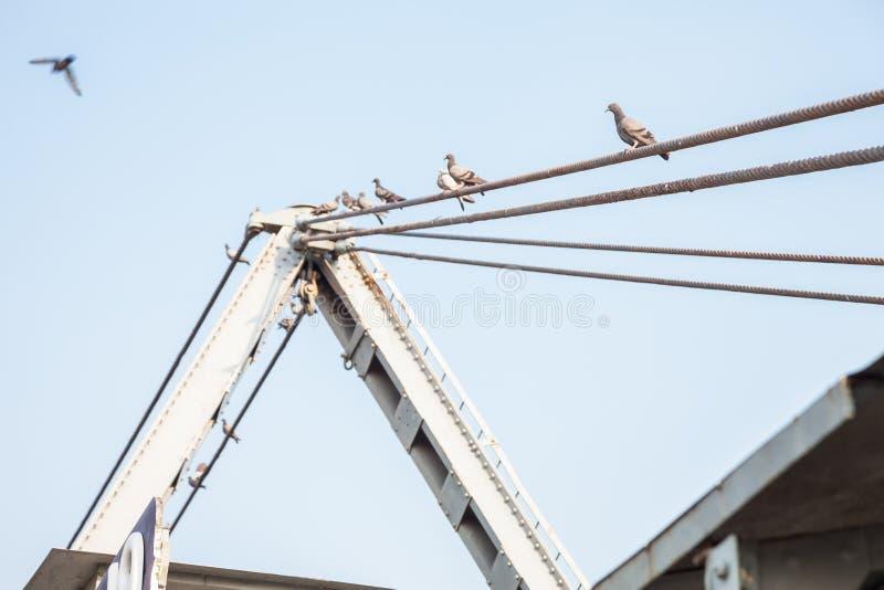 Pájaros que se sientan en la honda fotos de archivo libres de regalías