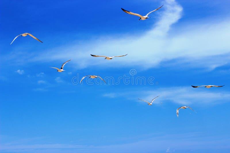 Pájaros que vuelan alrededor del océano imagenes de archivo