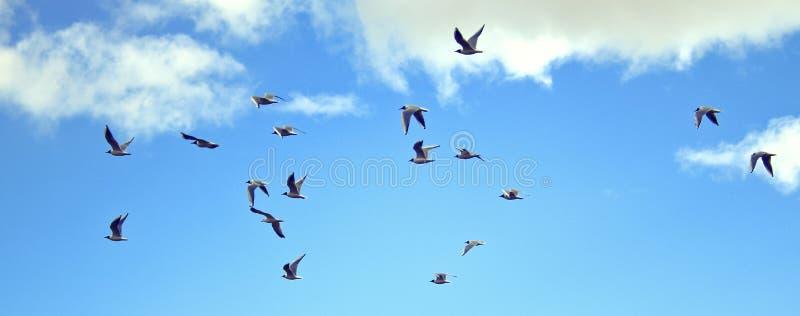 Pájaros que vuelan arriba imagen de archivo