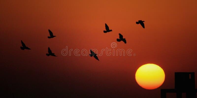 Pájaros que vuelan durante puesta del sol foto de archivo