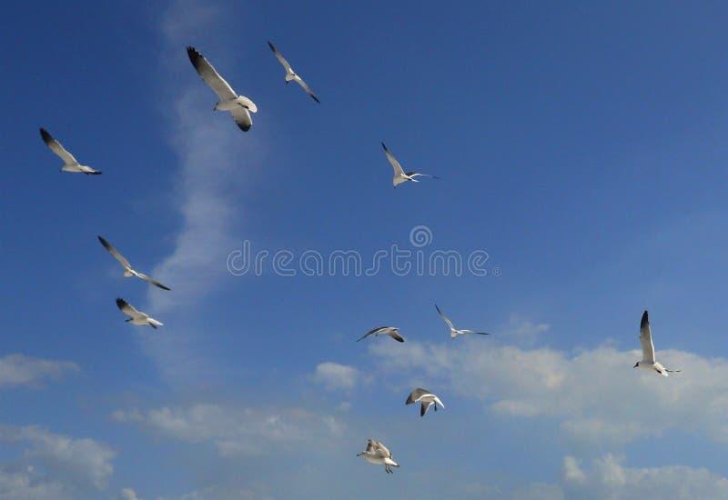 Pájaros que vuelan en el cielo azul fotos de archivo