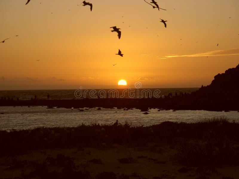 Pájaros que vuelan en el ejemplo de sunset foto de archivo libre de regalías