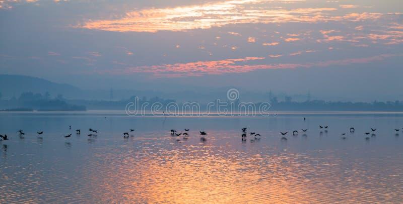Pájaros que vuelan sobre el lago imagenes de archivo