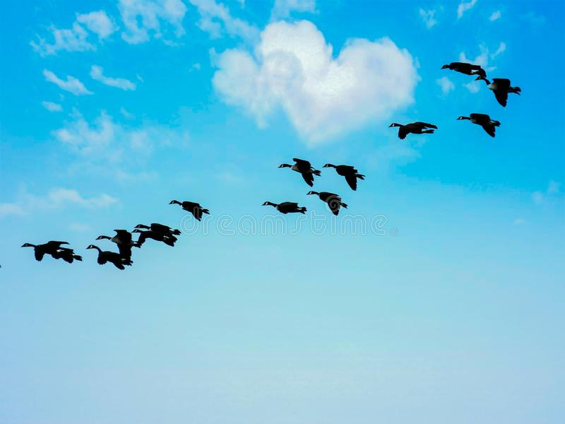 Pájaros que vuelan a través de la nube en forma de corazón en el cielo fotos de archivo
