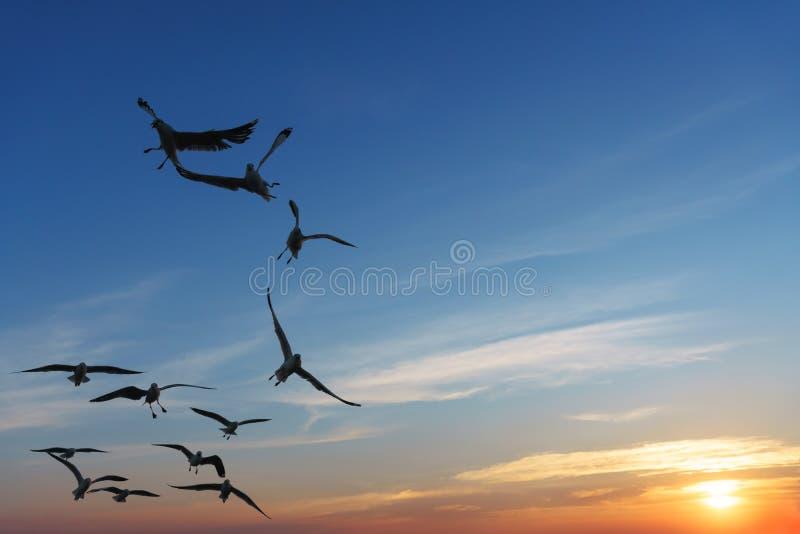 Pájaros retroiluminados que arrebatan la comida en cielo fotos de archivo