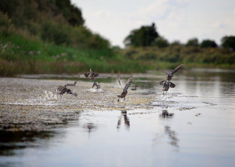 Pájaros salvajes fotos de archivo libres de regalías