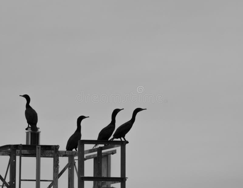 Pájaros salvajes que intentan decidir qué manera de volar imágenes de archivo libres de regalías