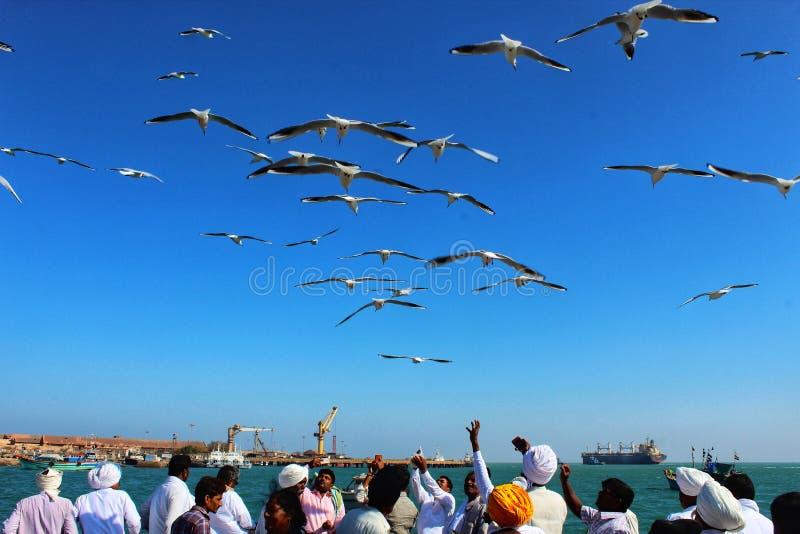 Pájaros sobre el mar que consigue feeded foto de archivo