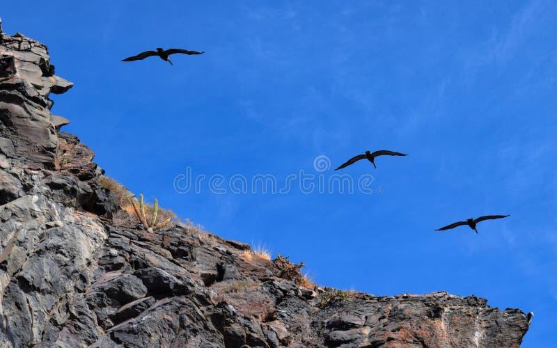 Pájaros sobre la formación de roca vulcanic en Corona Island, Loreto Mexico foto de archivo