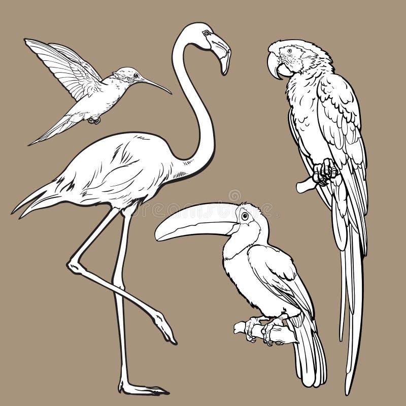 Pájaros tropicales exóticos - flamenco, macaw, colibrí y tucán libre illustration