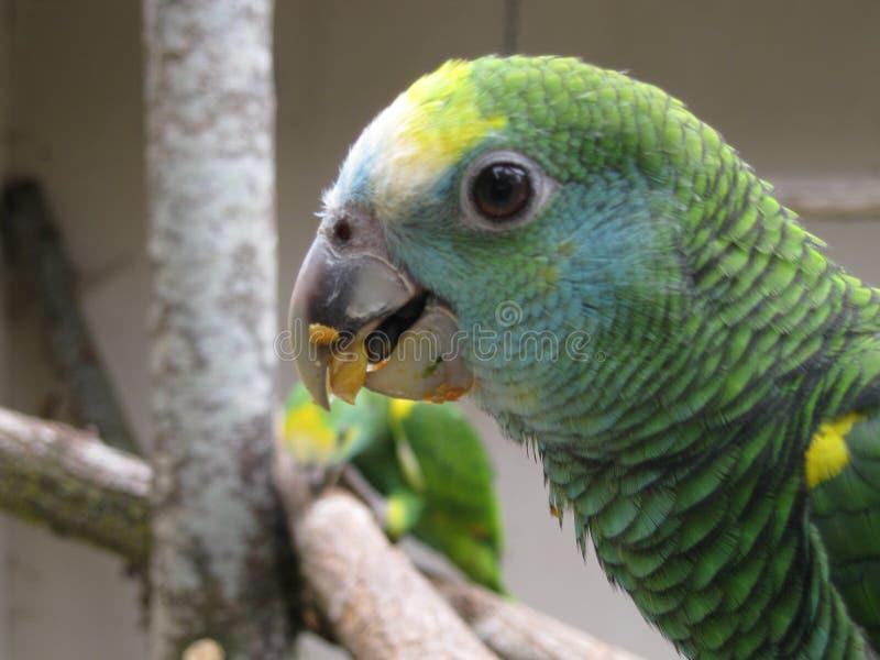 Pájaros verdes fotos de archivo