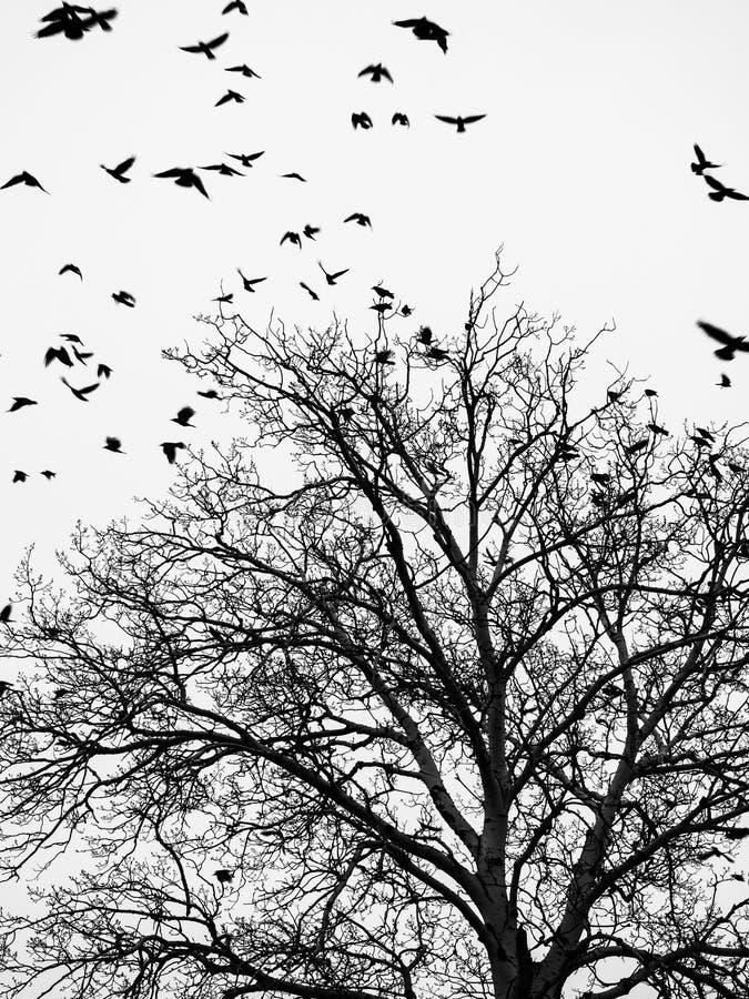 Pájaros y árboles fotografía de archivo libre de regalías