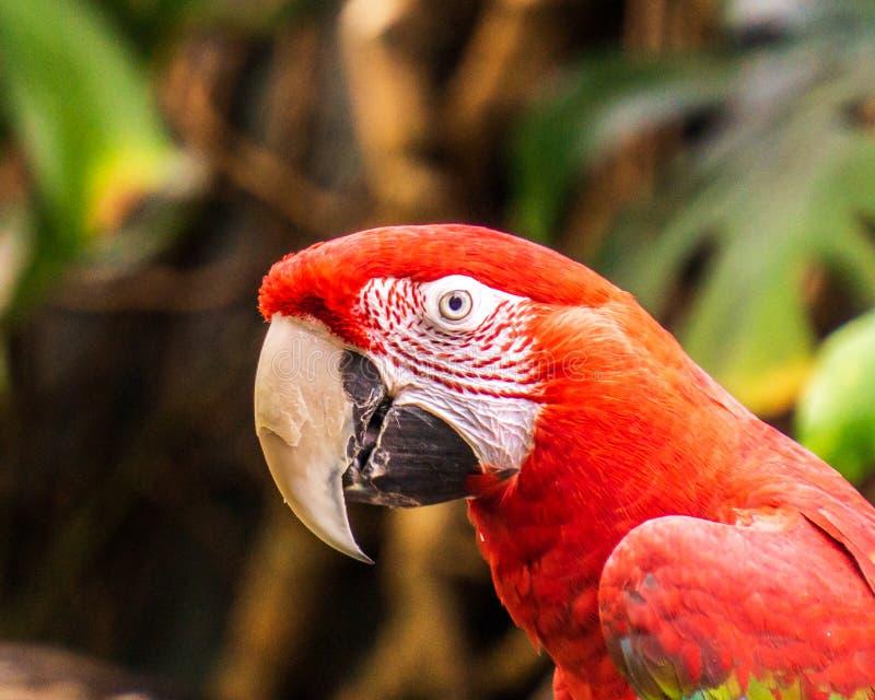 Pájaros y animales exóticos del loro en fauna en el ajuste natural fotos de archivo