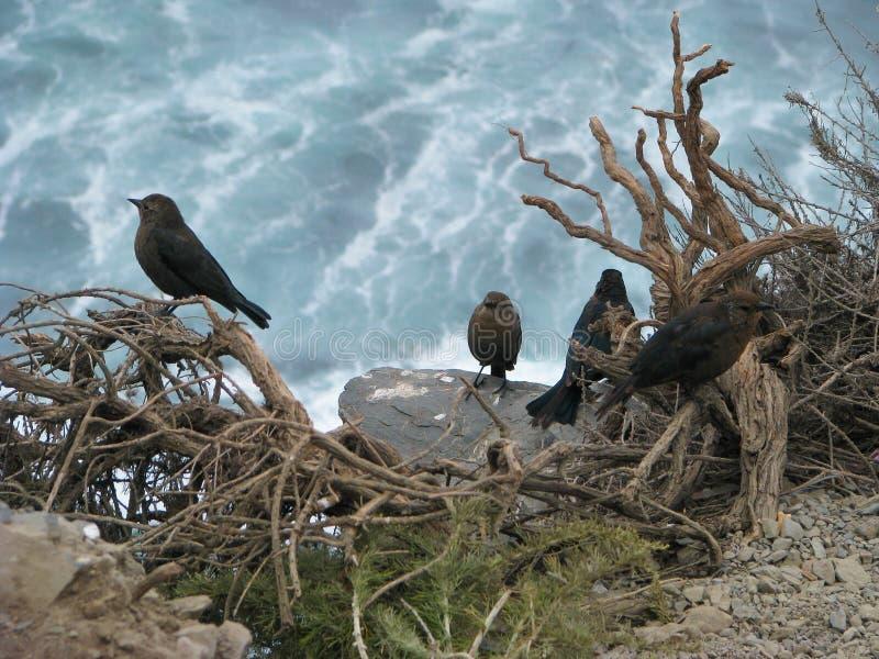 Pájaros y océano imágenes de archivo libres de regalías