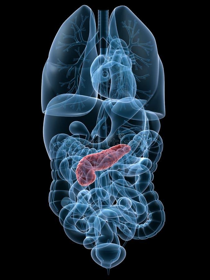 Páncreas destacado ilustración del vector