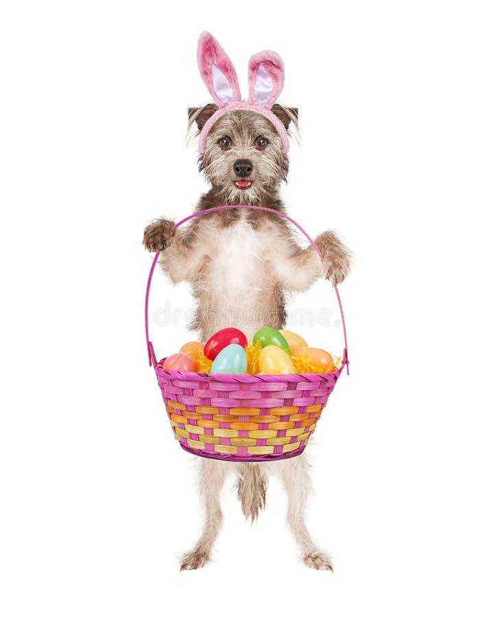 Páscoa bonito Bunny Dog ilustração stock