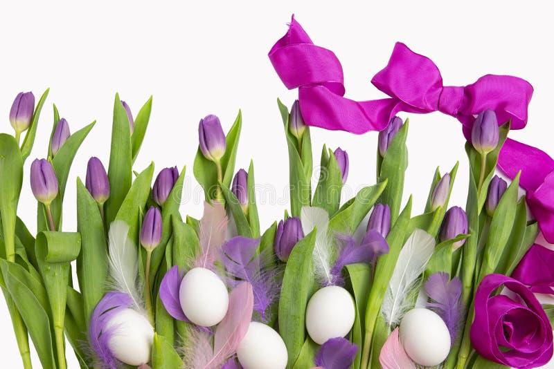 Páscoa Bonito ilumine - tulipas roxas com ovos da páscoa e penas isoladas no fundo branco Flores e plantas da mola imagens de stock royalty free
