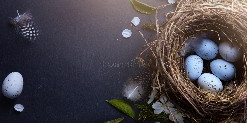 Páscoa feliz; Os ovos da páscoa no ninho e na mola florescem em vagabundos da tabela imagem de stock royalty free
