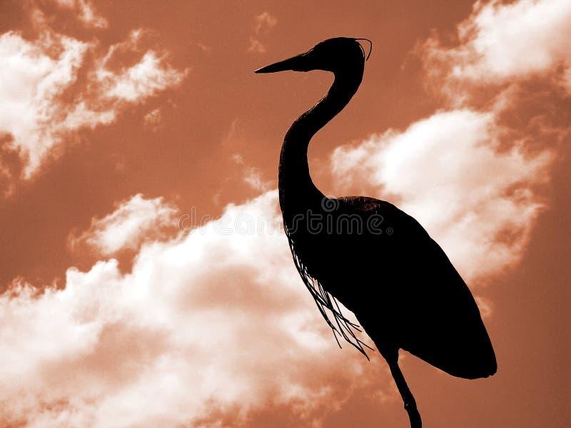 Download Pássaro imagem de stock. Imagem de silhueta, cloudy, bico - 125285