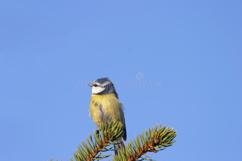 Pássaro Foto de Stock Royalty Free
