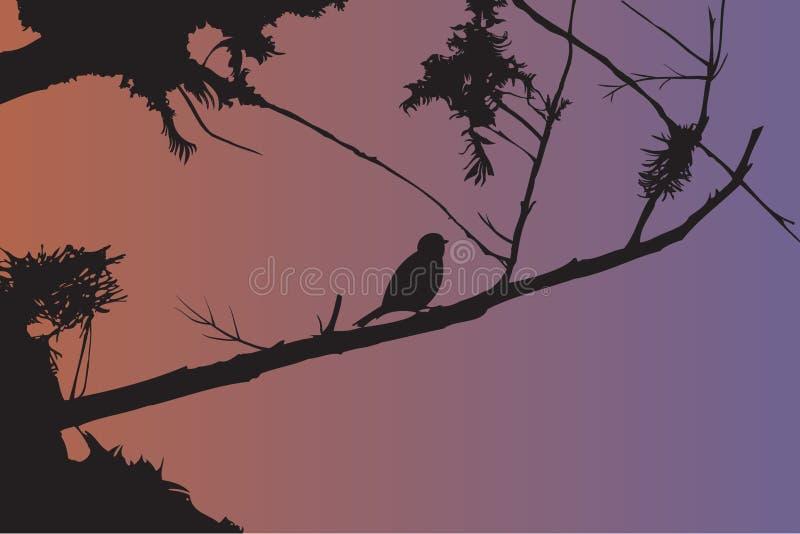 Pássaro ilustração do vetor
