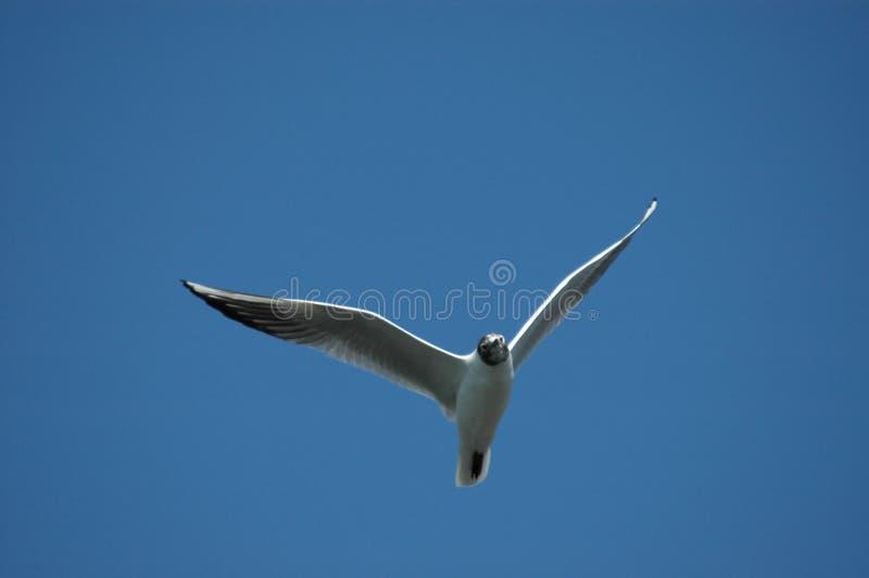 Download Pássaro imagem de stock. Imagem de mosca, rápido, pássaro - 526157