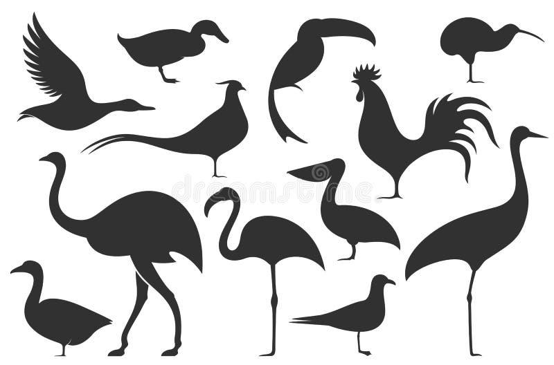 Pássaro abstrato Silhueta ilustração royalty free