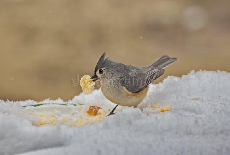 Pássaro adornado do Titmouse na neve imagens de stock royalty free