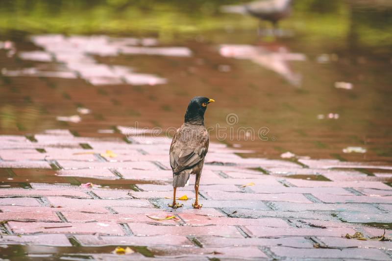 Pássaro após a chuva fotos de stock royalty free