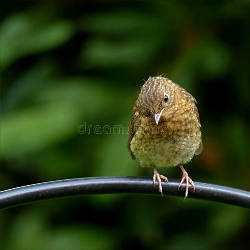Pássaro, Bico, Fauna, Carriça Domínio Público Cc0 Imagem