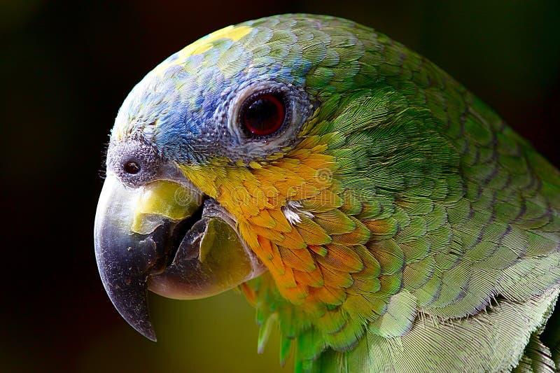 Pássaro, bico, papagaio, fauna