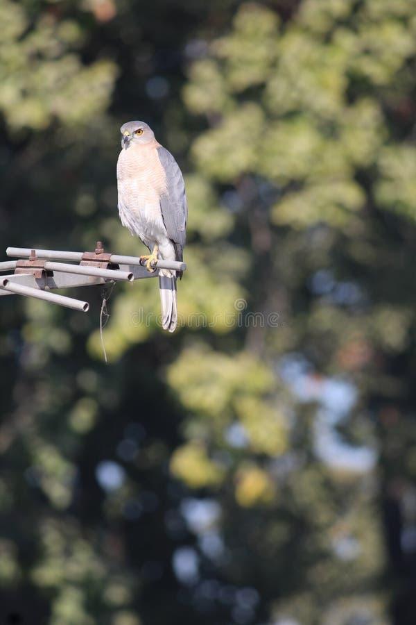 Pássaro bonito fotografia de stock royalty free