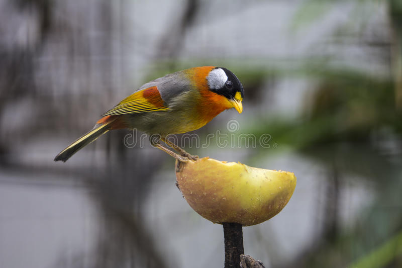 Pássaro bonito imagem de stock