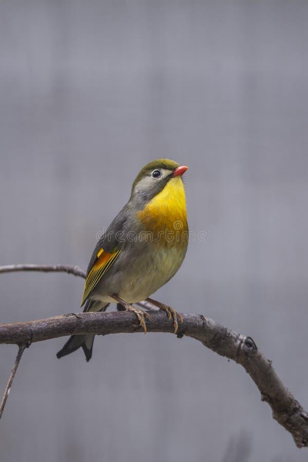 Pássaro bonito fotografia de stock