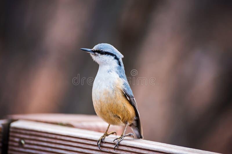 Pássaro bonito em uma cerca fotografia de stock