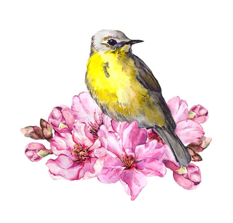 Pássaro bonito na flor de cerejeira, flores de sakura no tempo de mola Galho da aquarela ilustração do vetor