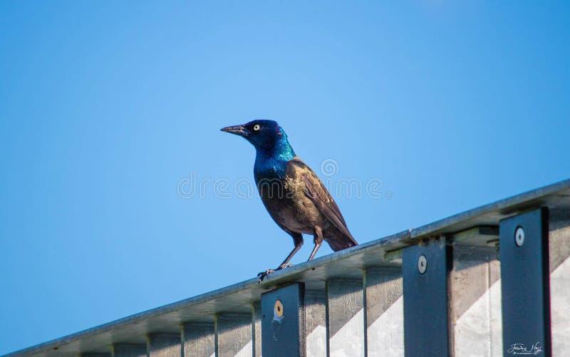 Pássaro bonito que aprecia o dia ensolarado imagens de stock