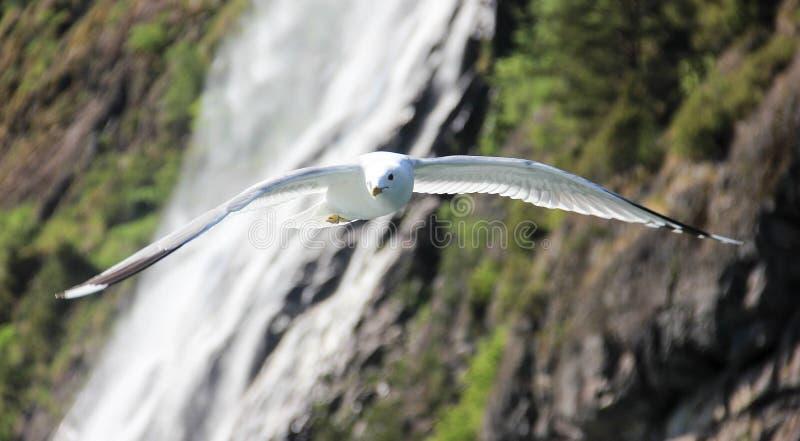 Pássaro branco de voo fotografia de stock