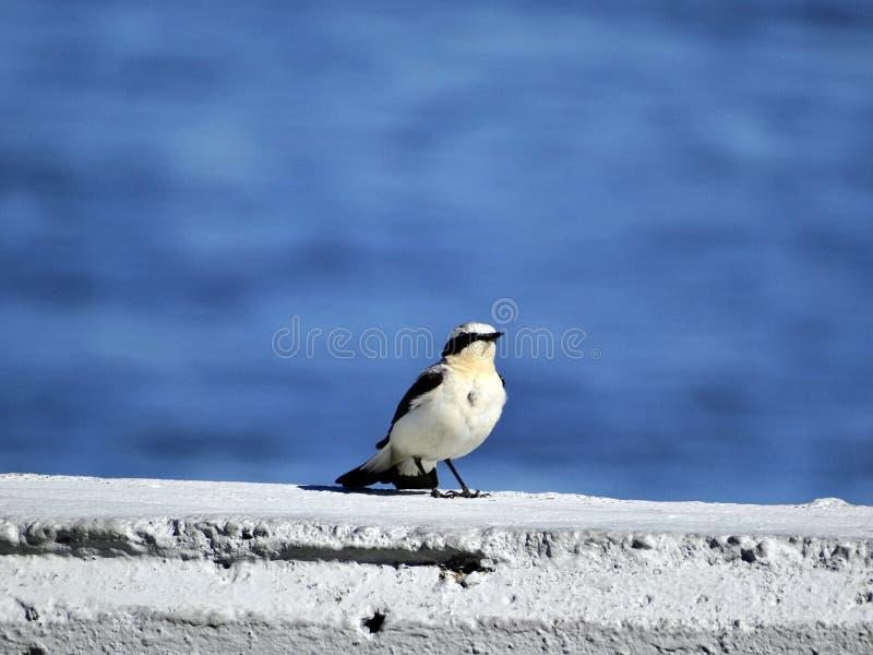 Pássaro cinzento pequeno imagens de stock royalty free