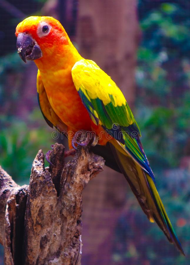 Pássaro colorido bonito do papagaio e da arara no jardim zoológico tropical da natureza fotografia de stock