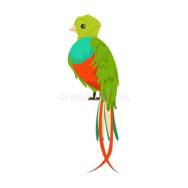 Pássaro colorido brilhante com uma ilustração colorida do vetor da cauda longa ilustração do vetor