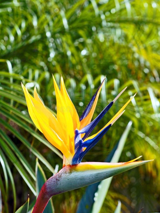 Pássaro colorido da flor de paraíso imagens de stock royalty free