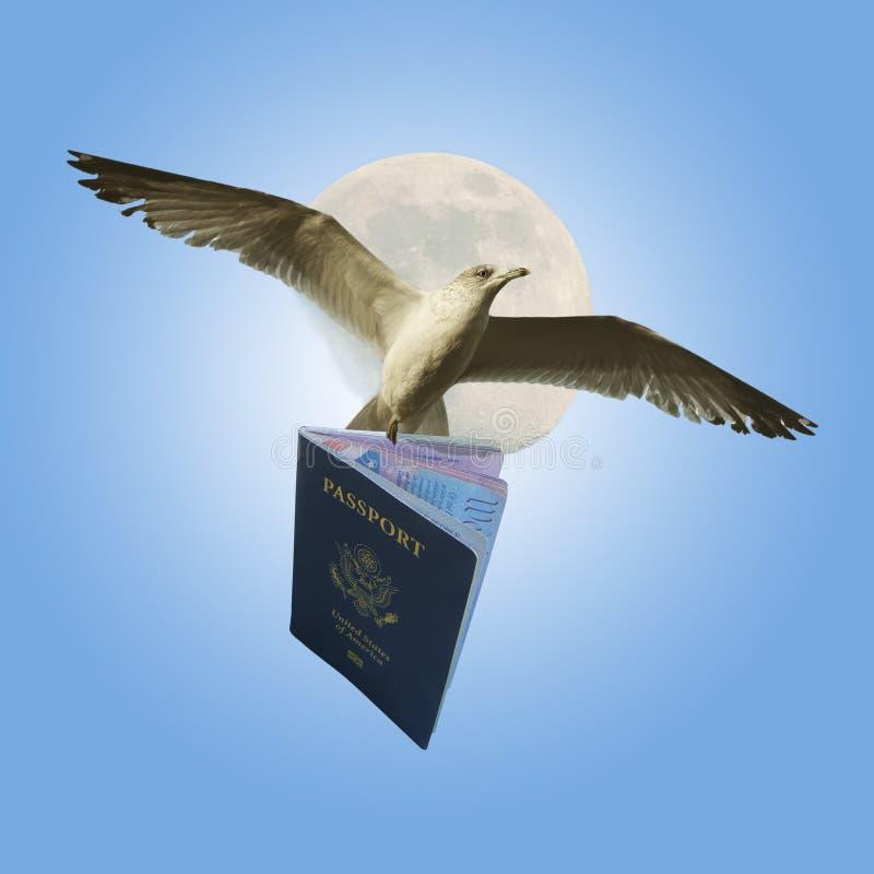 Pássaro com passaporte imagens de stock royalty free