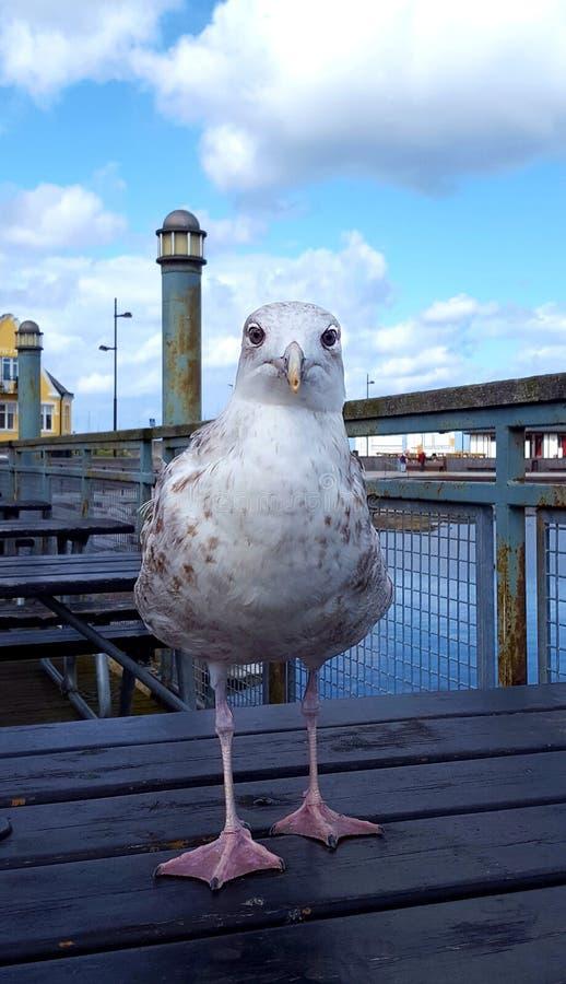Pássaro curioso fotos de stock royalty free
