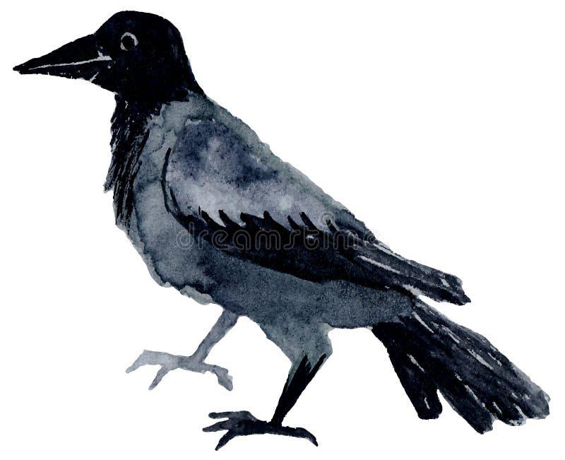Pássaro da aquarela ilustração royalty free