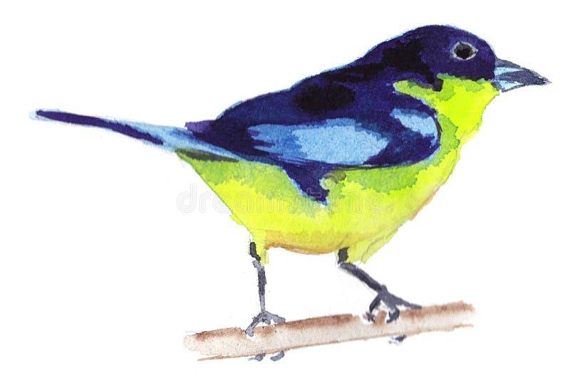Pássaro da aquarela imagem de stock