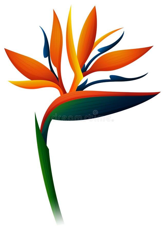 Pássaro da flor de paraíso no fundo branco ilustração royalty free